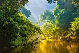 amazon rainforest. Wonderful Rainforest Amazon Rainforest And River Inside Rainforest H