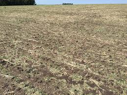 Soybean Hail Damage Chart Nebraska Crop Reports 2016 Cropwatch University Of