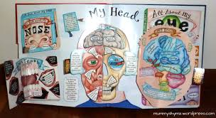 a look inside the head
