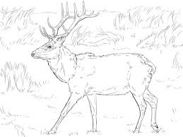 Small Picture Tule Elk Deer coloring page Free Printable Coloring Pages