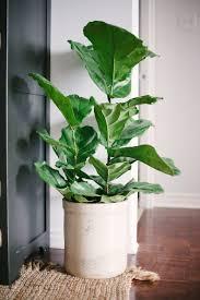 Emejing Big Indoor Plants Images - Interior Design Ideas .