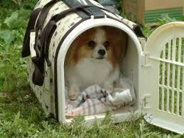 「ペット災害 画像」の画像検索結果