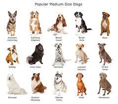 Dog Breed Sizes Goldenacresdogs Com