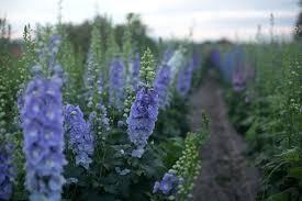 best flowers for cutting garden floret grow more flowers cutting flowers garden design