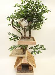 Decorative Indoor Trees Indoor Plant Decoration Ideas E2 80 93 Mvbjournal Com 5 Photos Of