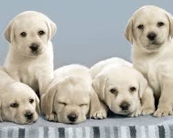 Cute Dog Wallpapers About Doggies 1280x1024