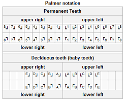 Palmer Notation Charting Universal Tooth Numbering System Chart Tooth Numbers Canada