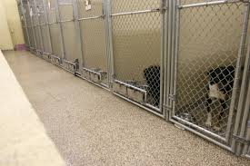 kennel flooring floors for kennels clean kenneled floor systems outdoor dog kennel flooring