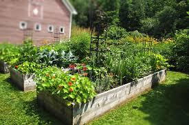 raised beds also give you total control over the soil that your plants are growing in in burlington and other urban environments much of the soil has been