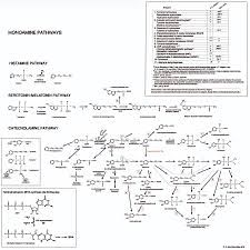 Neurotransmitter Chart Neurotransmitters Table
