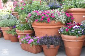 container gardening. How To Grow A Beautiful Container Garden Gardening O