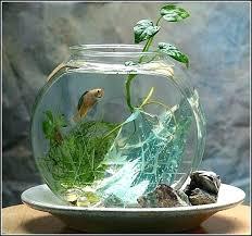 Decorative Fish Bowls Fish Bowl Ideas Fish Bowl Table Decoration Ideas Best On Tank Vase 32