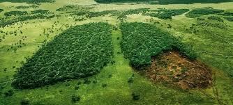 Kết quả hình ảnh cho environment protection