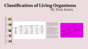 Mosquito Classification Chart Classification Of Living Organisms By Tesa Jones On Prezi