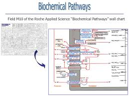 Pathway Assignments The Assignment Annotating Pathways