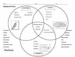 Bacteria Animal And Plant Cell Venn Diagram Bacteria Plant Cell Animal Venn Diagram