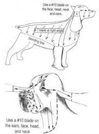 Dog Haircut Chart Spaniel Grooming Diagram Dog Grooming Tools Dog Grooming