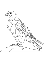 Small Picture 26 best Ways to Draw Birds images on Pinterest Animals Drawings
