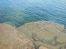 Smith Lake Depth Chart Lewis Smith Lake Wikipedia