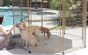 the girl is feeding dogs in a yard kennel near a pool