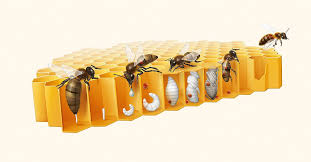 Bee Health Protection Against The Varroa Mote Research