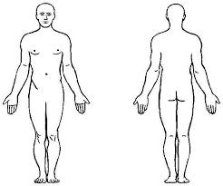 Human Body Anatomy Outline Printable For Kids Health Token