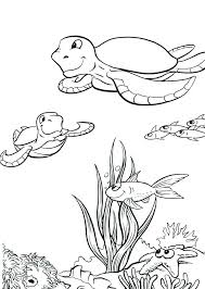 Cute Turtle Coloring Page Cute Turtle Coloring Pages Cute Baby Sea