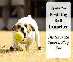 auto dog ball thrower automatic launcher for dogs australia