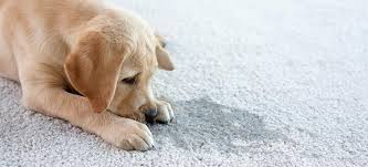 how to get rid of dog smell from your house