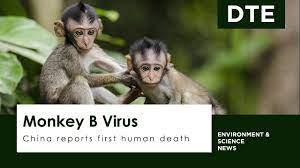 China reports first human death from Monkey B Virus - YouTube