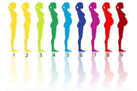 Pregnancy Stomach Size Chart Having A Baby Stages Of Pregnancy Live Science