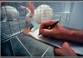 essay writing tips to should animals be used for research should animals be used for research