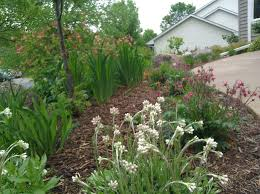 Sustainable Planting Design Ecoscapes Sustainable Landscaping Landscape Design Build