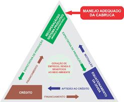 O TRIÂNGULO VIRTUOSO DO CACAU - Mercado do Cacau