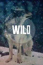 galaxy tumblr hipster wolf. Unique Hipster Wild Wolf And Snow Image For Galaxy Tumblr Hipster Wolf P