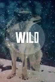 galaxy tumblr hipster wolf. Plain Wolf Wild Wolf And Snow Image With Galaxy Tumblr Hipster Wolf P