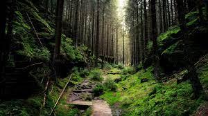 forest 4k desktop background hd #4K ...