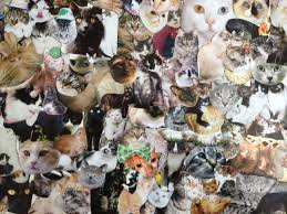 cats collage wallpaper. Exellent Wallpaper Cats Collage Tumblr Id 198296 Inside Wallpaper P