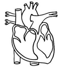 Small Picture Image result for Free colouring real heart Learning About the
