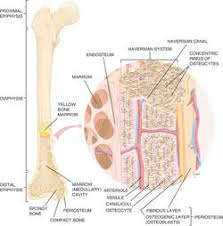 bone tissue bone tissue definition of bone tissue by medical dictionary
