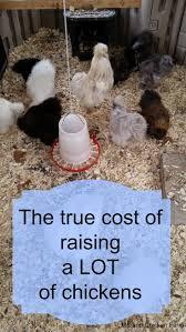 How To Keep Backyard Chickens EBook By Jill B  1230000982351 How To Keep Backyard Chickens