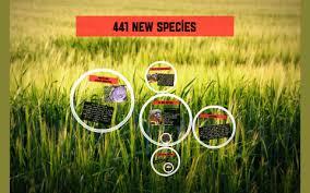 441 new species by Wendi Vaughn
