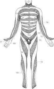 Dermatome An Overview Sciencedirect Topics