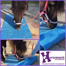 Belang Van Een Stappenplan Bij Hersenwerk Voor Paarden Facebook