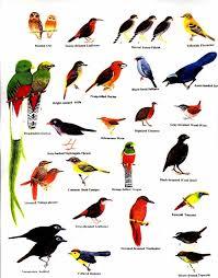 Louisiana Bird Identification Chart Field Guide Picture