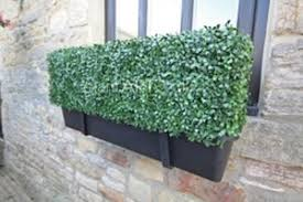 100cm artificial boxwood hedge