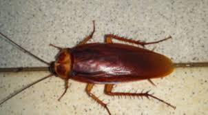 Are Cockroaches Causing Your Allergies? | EcoArmor Pest Defense