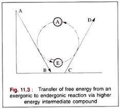 essay on bioenergetics biochemistry transfer of energy
