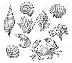 Vintage Illustrations Set Sea Shell Coral Crab And Shrimp Vector Engraving Vintage