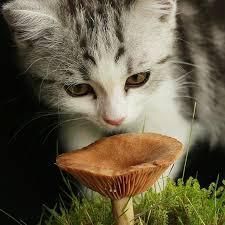 sơ cứu gây nôn khi chó mèo bị trúng độc